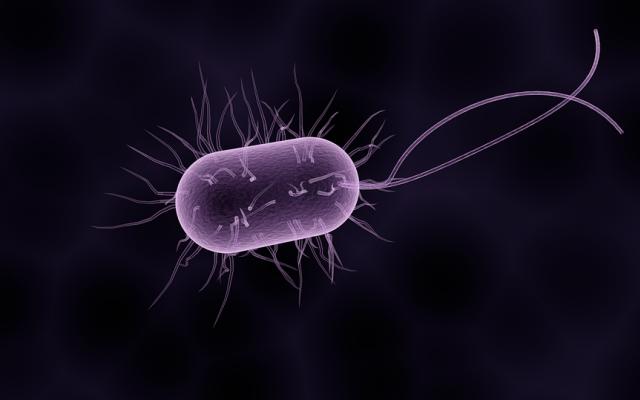 A tojáslevél jelei gyermekeknél. Giardiasis cdc. Harmadik világbeli paraziták